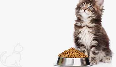Home 25 – Pet Food